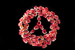 Pomegranate seeds arranged in the shape of a Mercedes Logo.  Fun.