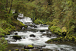 Cascading waterfalls on Sweet Creek, Siuslaw National Forest, Coast Range Mountains, Oregon.