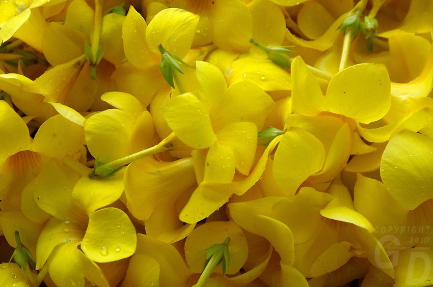 FLOWERS FOR THE SPA, PALAU MICRONESIA