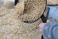 Weichfutter, Fettfutter, Selbstgemachtes Vogelfutter, Zutaten Haferflocken, Getreideflocken, pflanzliches Öl, Vogelfutter-Vogelfutter selbst herstellen, Vogelfutter selber machen, Vogelfutter selbermachen, Vogelfütterung, Fütterung, bird's feeding, bird seed, birdseed