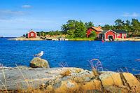 Gråtrut på en sten med röda stugor  och båthus på Möja i Stockholms skärgård.