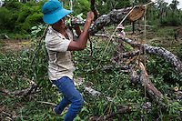 June 01, 2012 - Snoul, Cambodia. A tree is cut down by villagers to use the wood to build houses. © Nicolas Axelrod / Ruom
