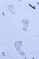Mensch, Spur, Fußabdruck im Schnee, Fussabdruck, Trittsiegel, Fußspur, Fuß