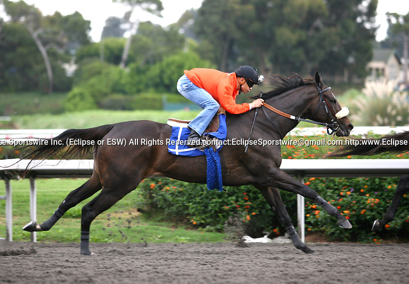 October 21, 2010: Zenyatta works under jockey Mike Smith in preparation for the Breeders' Cup; at Hollywood Park, Inglewood, CA..