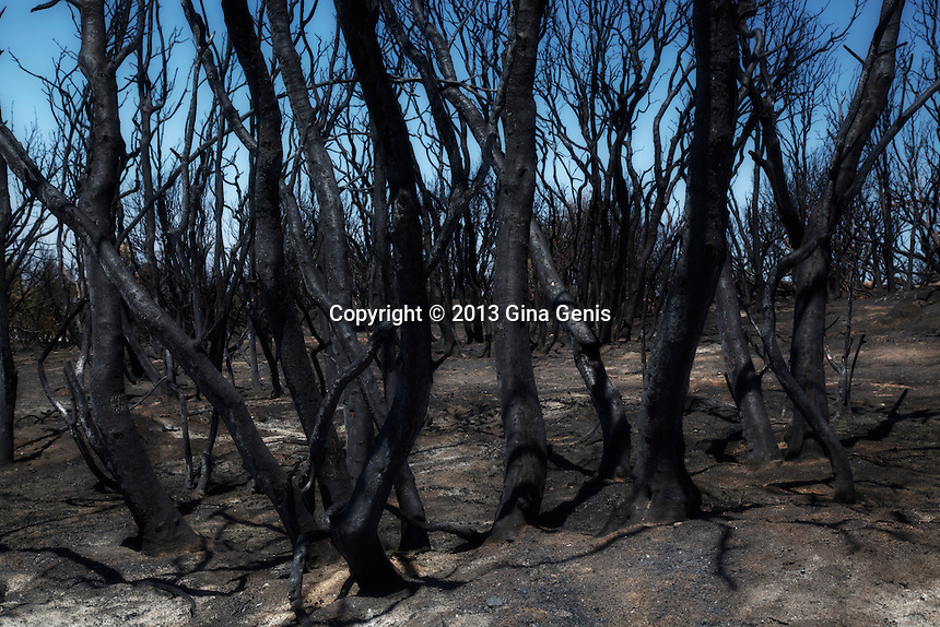 A forest of burned trees after the Mountain Center fire. July 23, 2013