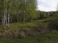 FOREST_LOCATION_90069