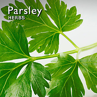 Parsley Pictures | Parsley Food Photos Images & Fotos
