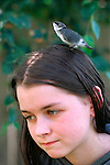 Baby bird, Violet Green Swallow, on top of girl's head (teenager 14 years old) looking for its mother, girl holding still, Marysville, Washington State USA  MR