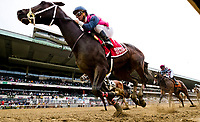 ELMONT, NY - JUNE 08: Our Braintrust, #1, ridden by Javier Castellano, wins the Tremont  during Friday racing action of the Belmont Stakes Festival at Belmont Park on June 8, 2018 in Elmont, New York. (Photo by Alex Evers/Eclipse Sportswire/Getty Images)