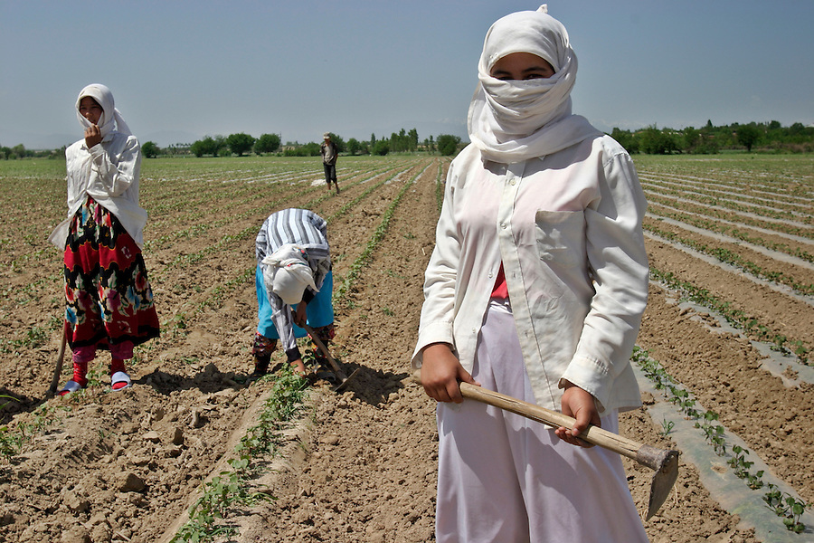 Namangan, Uzbekistan, 15/05/2004..A brigade of workers in the cotton fields of the Ferghana Valley. Many of the workers are young girls required to take time off from school to work in the fields.