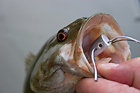 Published on Midcurrent.com<br />