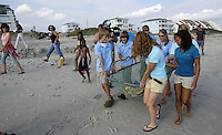 Cast members of a video being recorded for the Oxygen channel carry a loggerhead turtle for release into the ocean. As soon as her net carrier hit the sand, she headed straight toward the Atlantic waters. The turtle was rescued as a distressed hatchlingfrom a nest onPine Knoll Shores in 2003. It has been on exhibit in the Queen Anne's Revenge since the Aquarium opened in May 2006. Itwill be equipped with a satellite tracking device -- harmless to the turtle -- that willenable the tracking of its movements for about a year, Saturday, September 15, 2007. Beckley New_TurtleOxygen