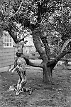 "Aztec New Mexico USA 1971. A skinned deer hangs from a tree in a front garden. The head will become a "" trophy"", while the body will be put into the deep freeze."