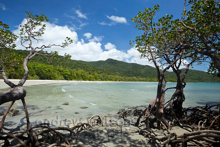 View through mangroves to Cape Tribulation Beach.  Daintree National Park, Queensland, Australia
