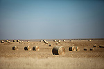 Round bales of hay sit across from Mitchell Baalman's 12,000-acre farm outside of Hoxie, Kan., on Thursday, Oct. 11, 2012. As historically dry conditions continue, farmers from South Dakota to the Texas panhandle rely on the Ogallala Aquifer, the largest underground aquifer in the United States, to irrigate crops. After decades of use, the falling water level ? accelerated by historic drought conditions over the last two years ? is putting pressure on farmers to ease usage or risk becoming the last generation to grow crops on the land. Farmers like Mitchell Baalman and Brett Oelke (both not pictured), are part of a farming community in in Sheridan County, Kansas, an agricultural hub in western Kansas, who have agreed to cut back on water use for crop irrigation so that their children and future generations can continue to farm and sustain themselves on the High Plains.