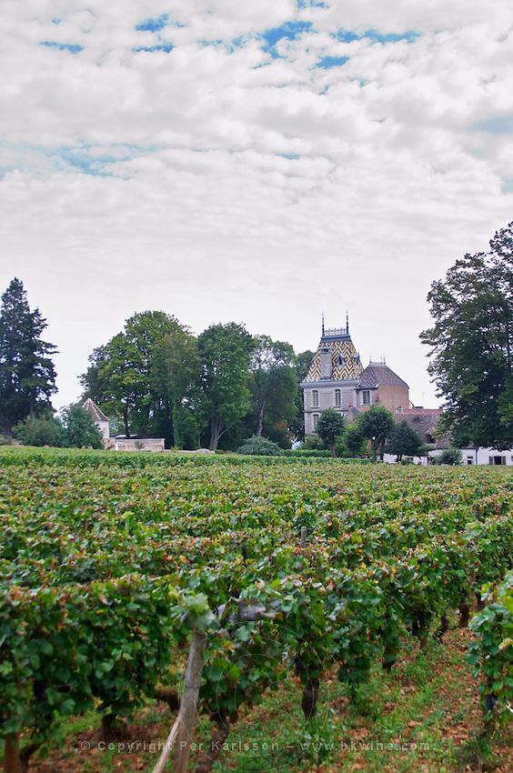 """Vineyard. Corton Le Chateau, Pierre Andre, """"Corton-Andre"""". Aloxe-Corton, Cote de Beaune, d'Or, Burgundy, France"""