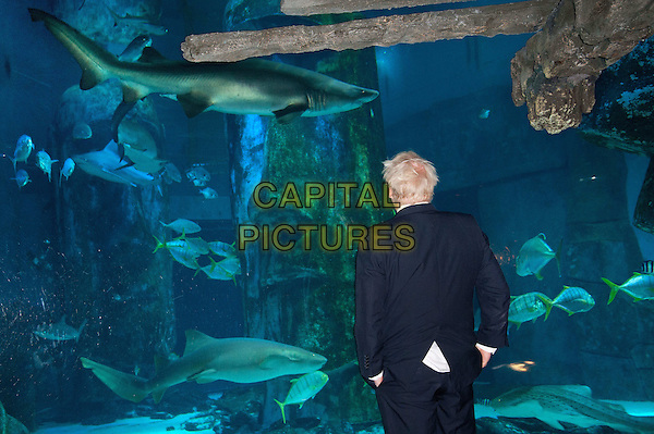 The Mayor of London Boris Johnson visits the London Aquarium's newest attraction, the shark tank, to promote the range of summer promotions available to Londoners and tourists alike, including 2 for 1 ticket offers and money off promotions. London Aquarium, London, England..August 17th, 2012.half length black suit water animals back behind rear .CAP/BF.©Bob Fidgeon/Capital Pictures.