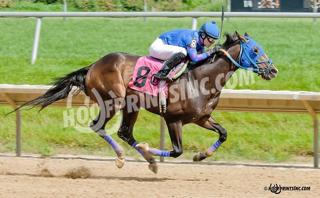 Brimstone Island winning at Delaware Park on 6/15/13