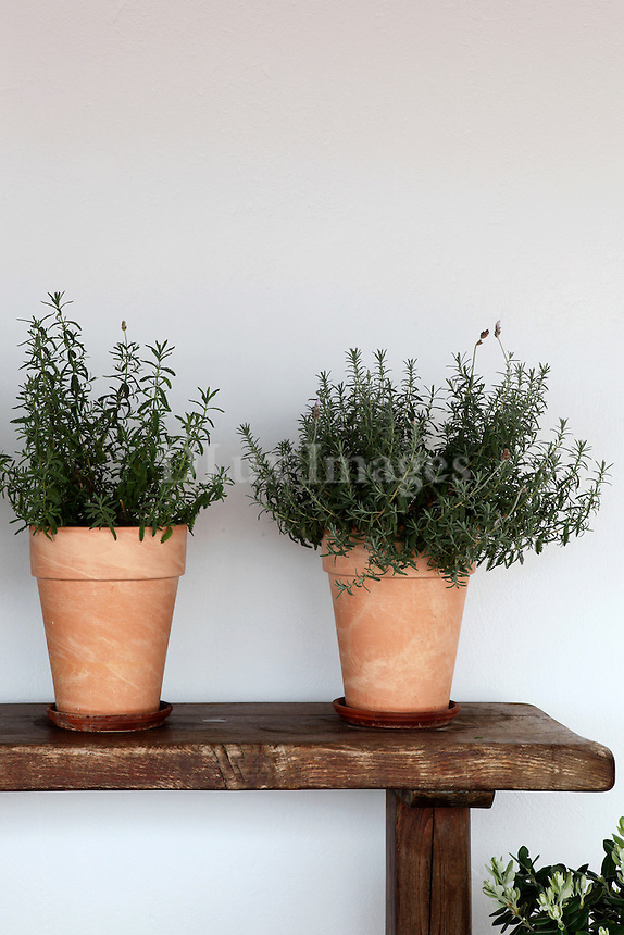 flowerpots with herbs on wooden end table