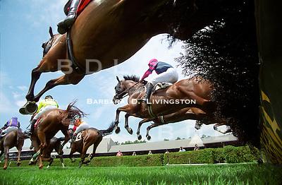 Saratoga jumps, 2003. Saratoga Race Course, Saratoga Racetrack, beautiful horse racing, Thoroughbred racing, horse, equine, racehorse, morning mood