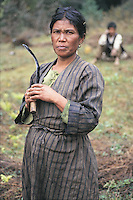 Men and women work equally hard in the terraced fields of northern Nepal. And there is no farm machinery here. Everything is done by the toil and sweat of the people or, if they are wealthy, their cattle.