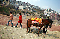 CHINA. Chongqing Province.  A horse stands on the side of the road in Wushan, a town on the Yangtze river near to the 3 Gorges. The flooding of the three Gorges, by damming the Yangtze near the town of YiChang, has remained a controversial subject due to the negative environmental consequences and the displacement of millions of people in the flood plain. The Yangtze River however is reported to be at its lowest level in 150 years as a result of a country-wide drought. It is China's longest river and the third longest in the world. Originating in Tibet, the river flows for 3,964 miles (6,380km) through central China into the East China Sea at Shanghai.  2008.