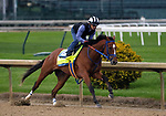 April 28, 2019 : By My Standards works out  at Churchill Downs, Louisville, Kentucky, preparing for a start in the Kentucky Derby. Owner Allied Racing Stable LLC, Trainer W. Bret Calhoun. By Goldencents x A Jealous Woman (Muqtarib)  Mary M. Meek/ESW/CSM