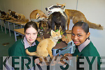 FURRY FRIENDS: Sydney Stokes Hurley and Cathriona Nelly Willy Radegonde from Tralee Community College took part in the animal workshop at Scifest in the ITT.