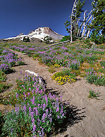 Trail behind Timberline Lodge  leading towards Mt Hood
