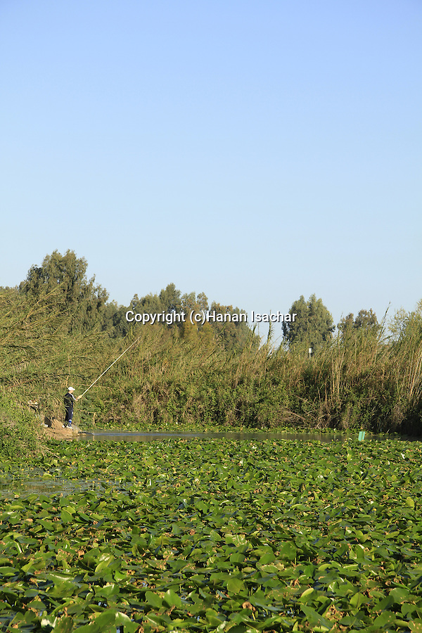 Israel, Sharon, the Water Lily pool at the Yarkon Springs