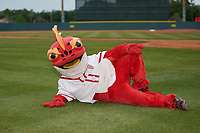 Florida Fire Frogs mascot Striker before a Florida State League game against the Jupiter Hammerheads on April 8, 2019 at Osceola County Stadium in Kissimmee, Florida.  Florida defeated Jupiter 7-6 in ten innings.  (Mike Janes/Four Seam Images)