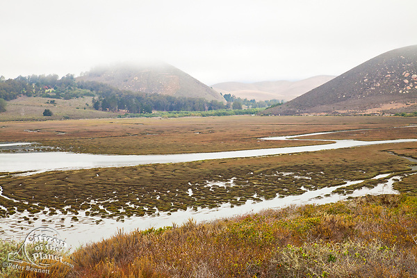 Morro Estuary Natural Preserve and its 800 acre wetland are home to dozens of endangered species.  This bird sanctuary is home to more than 250 species of land, sea, and shore birds, both migratory and resident, Los Osos, San Luis Obispos County, California, USA