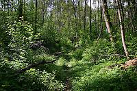 Laubmischwald, Mischwald, Laubwald mit viel Unterwuchs und verschiedenen Altersstufen, Krautschicht