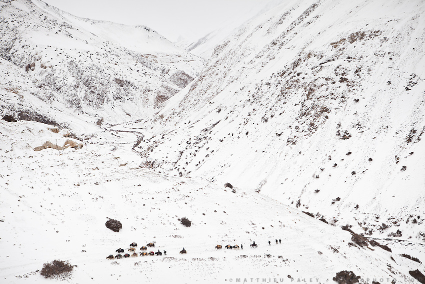 "A Kyrgyz caravan on its way to the lower valley. Boraq. From Zan Kuk to Zardibar (""yellow door""). ..Trekking back down from the Little Pamir, with yak caravan, over the frozen Wakhan river."