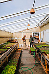 "ENCINITAS, CALIFORNIA - FEBRUARY 26: Daron ""Farmer D"" Joffe, Director Of Agricultural Innovation And Development at Leichtag Foundation & Farmer D Consulting speaks to Joaquin Herschman (left), biodynamic nurseryman in a greenhouse at the Leichtag Foundation Farm in Encinitas, California."