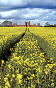 19/04/2012.  ..After days of heavy rain a field of oilseed rape soaks up a few minutes sunshine as more rain clouds gather above Vernon's Folly near Sudbury, Derbyshire.  The now derelict, fortress-like, folly was built in 1723 by Lord George Vernon, the owner of nearby Sudbury hall, to house the estate's deer herd. ..All Rights Reserved - F Stop Press.  www.fstoppress.com. Tel: +44 (0)1335 300098.Copyrighted Image. Fees charged will reflect previously agreed terms or space rates for individual publications, states or country.