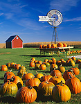 Bureau County, IL<br /> Fall scene of pumpkins, windmill, and distant red barn under a blue sky - Miller's Home Grown Produce, Neponset, IL