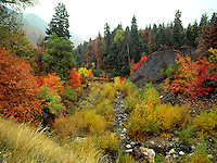Art in Nature 9409-0223 - Nebo Creek, in Payson Canyon in autumn, surrounded by colorful fall foliage. Wasatch Range, Rocky Mountains, Utah.