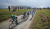 Ronde van Vlaanderen 2013..peloton speeding over the Holleweg cobbles