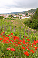 vineyard red poppies hermitage rhone france