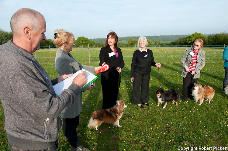 Breed Show - Judge awarding rosette to owner in the line while steward with clip board makes notes, Sheltie Dogs