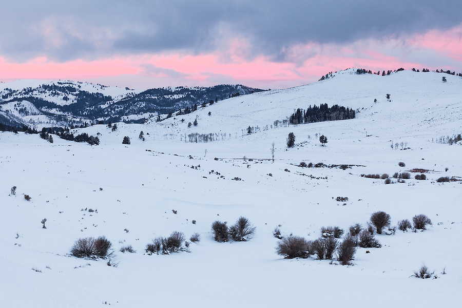 Pink light shines between the clouds on a cold winter morning in Yellowstone National Park.