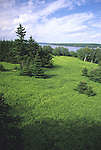 Field of ferns on Sears Island, Searsport, Maine, USA