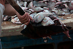 on the fish market of puerto lopez ecuador the fish are shoveled around
