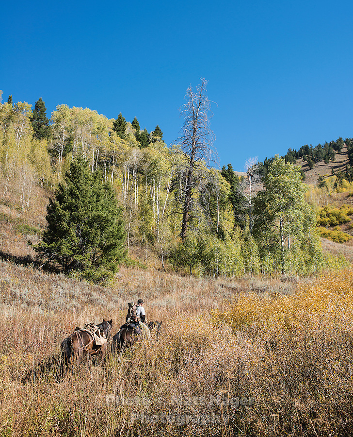 Guide Greg Kriese with Trefren Outfitters on Greyback Ridge in the Hoeback Drainage of Wyoming Region H, outside of Alpine, Wyoming, September 22, 2015.<br /> <br /> Photo by Matt Nager