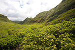 Along the Honoapi'ilani Highway on West Maui's rugged North Shore