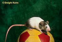 MU50-061x  Pet Mouse