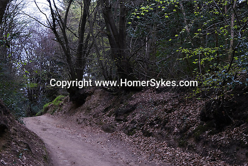 Wolvens Lane, Coldharbour Surrey. The ancient track through National Trust forest leading to Maggs Well.
