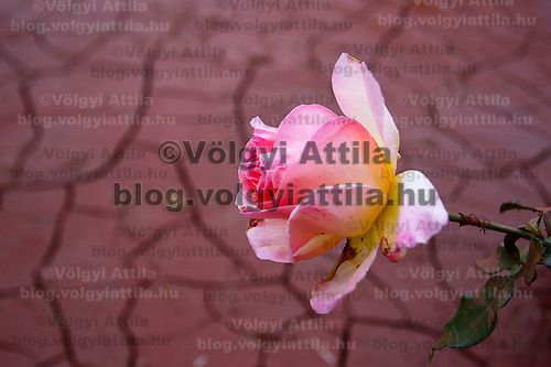 foto@volgyiattila.hu