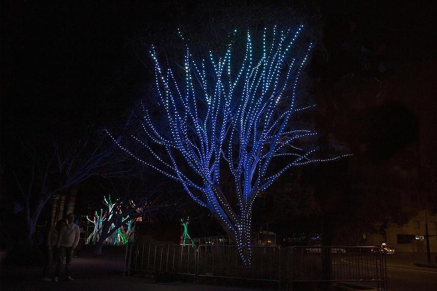 Sydney Vivid, Philips Tree